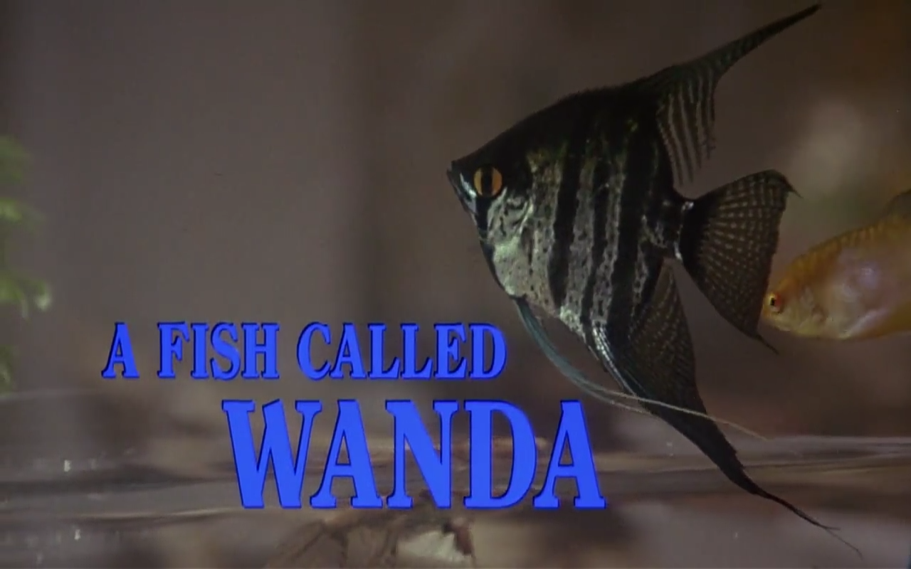 a review of the film a fish called wanda More movie shopping who depend on any combination of pig-headedness, sarcasm and larynx-strained rantings to stumble through life -- don't cast for them in his new comedy, a fish called wanda dastardly otto and wanda would love to take the booty and run, but only ken and george know of its whereabouts.